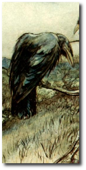 Grey down caught in the bristles around the raven's beak, rolled along the ground, drifted gently in the air. I'd never seen a raven hunting before, and I watched, fascinated. Artwork by . This image, The Twa Corbies, is in the public domain in the U.S. More details at .