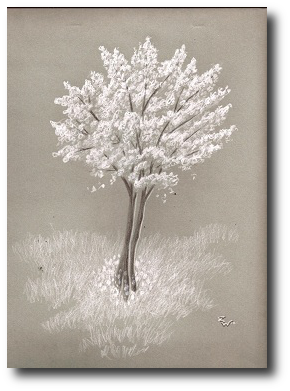 """""""Oh, look,"""" said Pete after too long. """"Cherry blossoms.  those."""" Artwork©2012, R.W.Ware"""